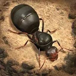 rayfile手机客户端(飞速网盘)