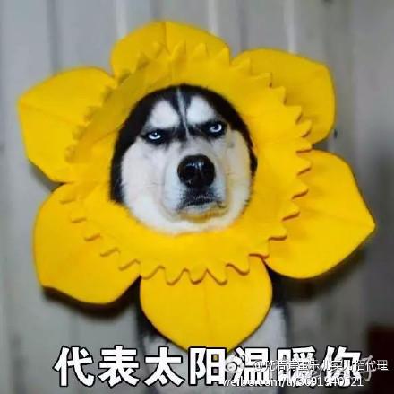 dog带字微信表情包