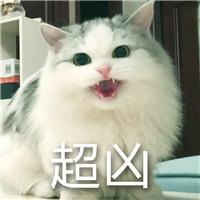 超凶的猫咪微信表情包