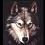 黑狼ASP解密工具(asp代码加密工具破解)