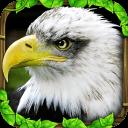 老鹰模拟器中文版破解版无限金币(Eagle Simulator)