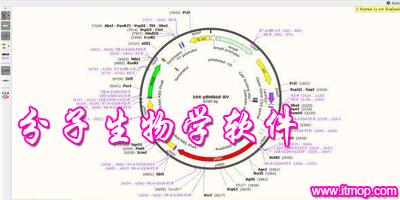 分子生物学软件