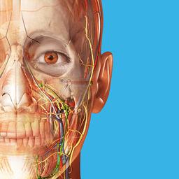 2018版人体解剖学图谱破解版
