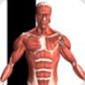 人体解剖软件中文版