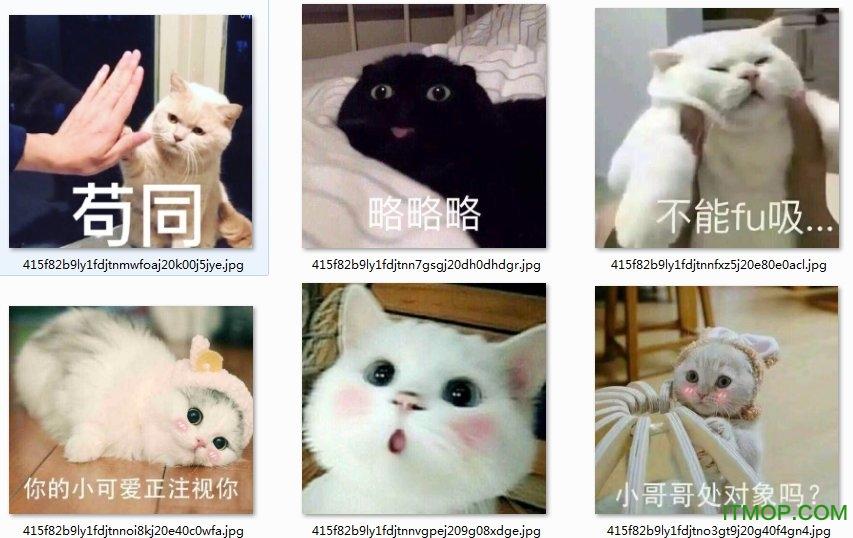 猫咪带字表情包大全 高清无水印版 0