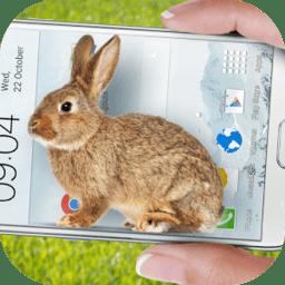 手机的小兔子玩笑(Bunny in Phone Cute joke)