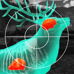 野生模拟狩猎模拟器v1.313 安卓版