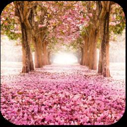 樱花树下3d动态手机壁纸