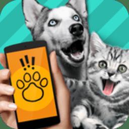 动物交流器