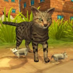 小流浪猫tengbo9885