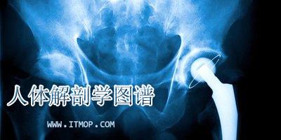 人体解剖学图谱app_人体解剖学图谱破解版_人体解剖图谱推荐