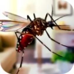 蚊子家庭生活模拟器3D