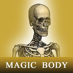 骨骼系统图集