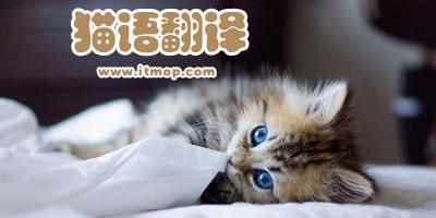 猫语翻译器哪个最好用_猫语翻译器在线使用_猫语翻译app下载