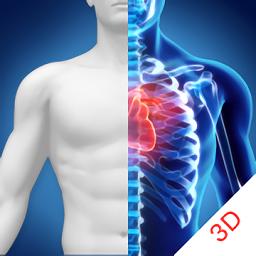 3D人体解剖图谱