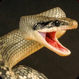 蟒蛇狂暴手机版
