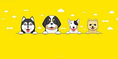 宠物服务app