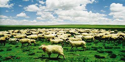 畜牧app下载-畜牧app哪个好-畜牧软件推荐