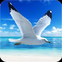 海鸥模拟器游戏