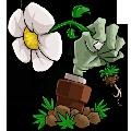 植物大�鸾┦��O�y版